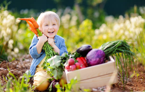 Lindo niño sosteniendo un ramo de zanahorias orgánicas frescas en jardín interno. Estilo de vida familiar saludable. - foto de stock