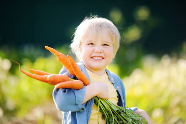 niedliche kleine junge hält eine reihe von frischen bio-karotten im heimischen garten - karotten gesund stock-fotos und bilder