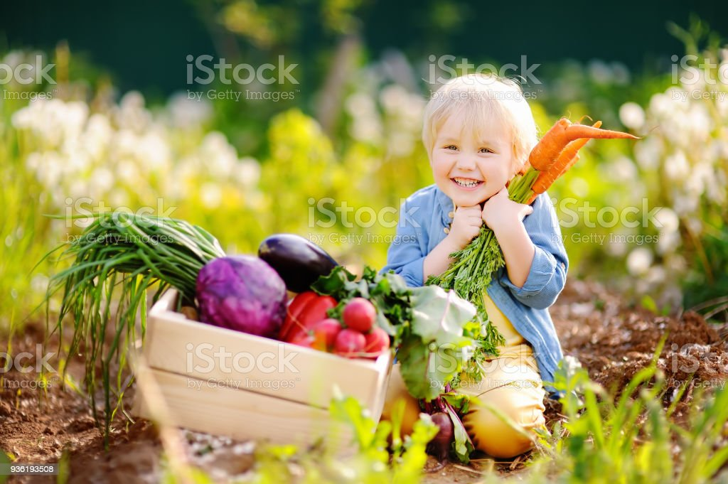 Cute little boy holding a bunch of fresh organic carrots in domestic garden Cute little boy holding a bunch of fresh organic carrots in domestic garden. Healthy family lifestyle Active Lifestyle Stock Photo