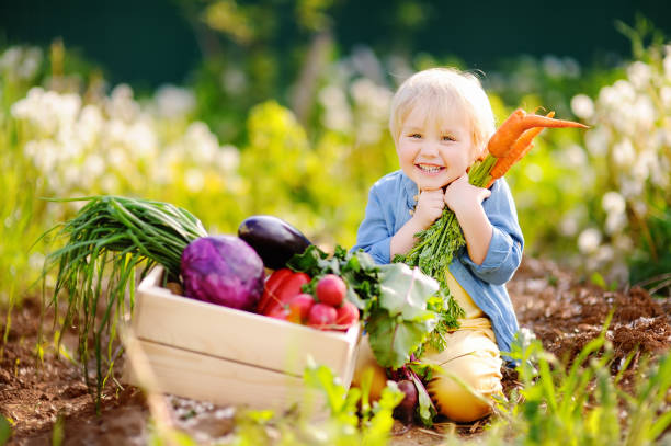 cute little boy holding a bunch of fresh organic carrots in domestic garden - organic farm stock photos and pictures