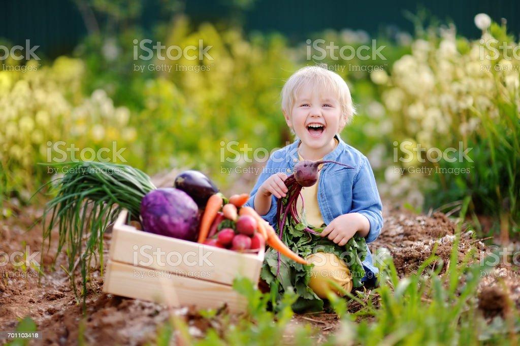Cute little boy holding fresh organic beet in domestic garden stock photo