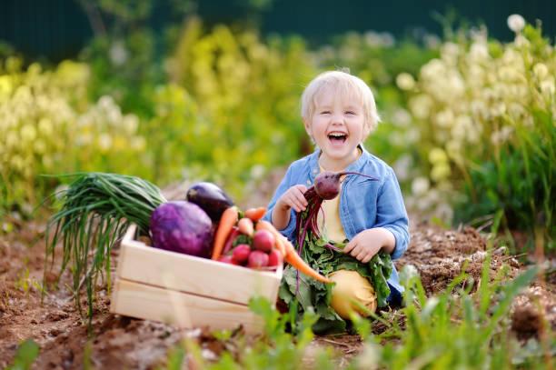 Lindo niño con remolacha orgánica fresca en jardín interior - foto de stock