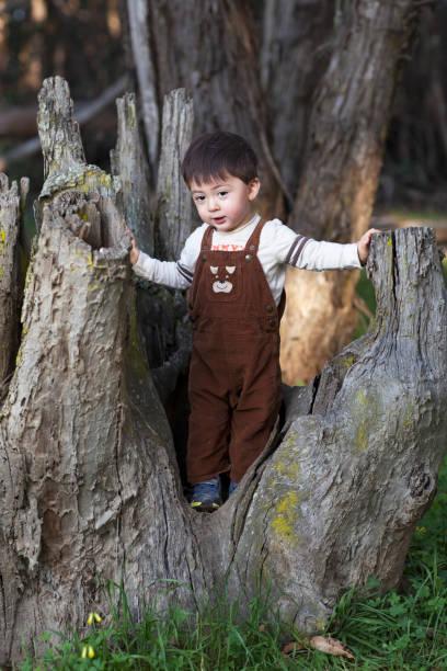 cute little boy in corduroy overalls standing in a oak tree stump - langes lätzchen stock-fotos und bilder