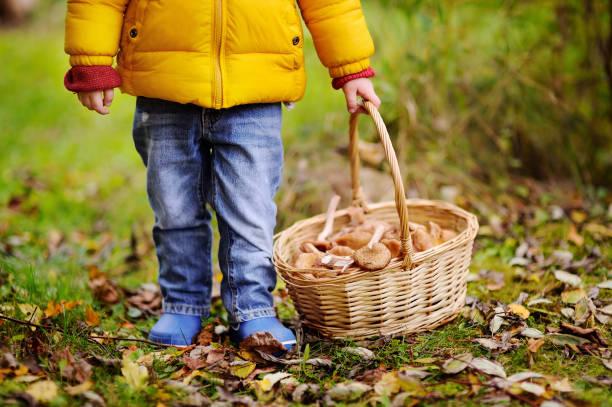 söt liten pojke plocka svamp i korg - höst plocka svamp bildbanksfoton och bilder