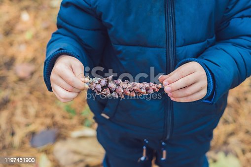 istock Cute little boy playing with big pine cone outdoors. Game for kids on the nature 1197451900