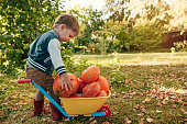 Happy child with pumpkins enjoying autumn evening