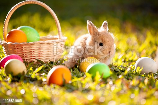 istock Cute little bunny and easter eggs in the meadow 1128821865