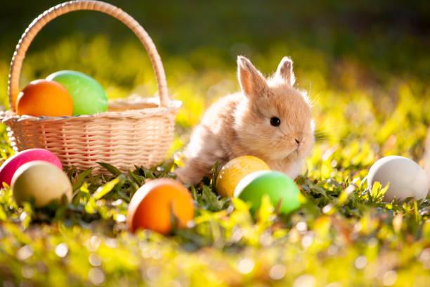 Niedliche kleine Hasen und Ostereier in der Wiese – Foto
