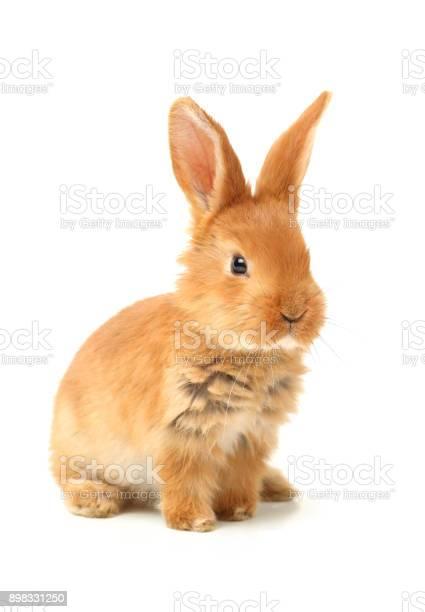 Cute little bunny on a white background picture id898331250?b=1&k=6&m=898331250&s=612x612&h=cfyo0i1augpimzd ipsznpcnp azgd1d4jaq8gtmjjo=