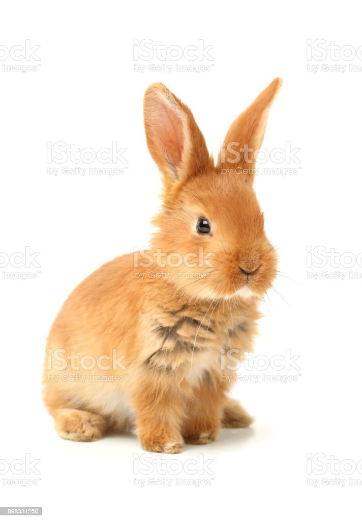 Cute little bunny on a white background stock photo