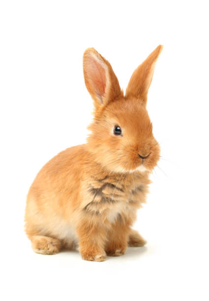 cute little bunny on a white background - rabbit stock photos and pictures