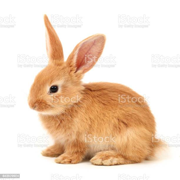 Cute little bunny on white background picture id643529924?b=1&k=6&m=643529924&s=612x612&h=zjsfnk0k9xcnnlymixdgg5jbnd qnbmmd5kl02g2shy=