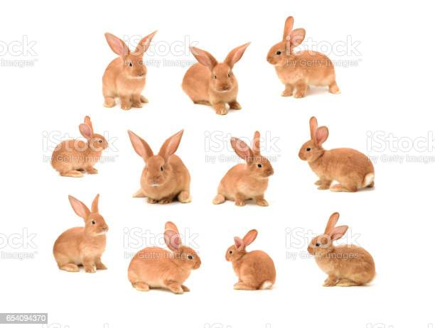Cute little bunny on white background picture id654094370?b=1&k=6&m=654094370&s=612x612&h=o5klj4emeey31kmyjvloayoixzk5kcumm3 eyovsgvg=
