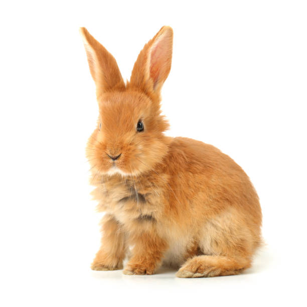 cute little bunny  on white  background - rabbit stock photos and pictures