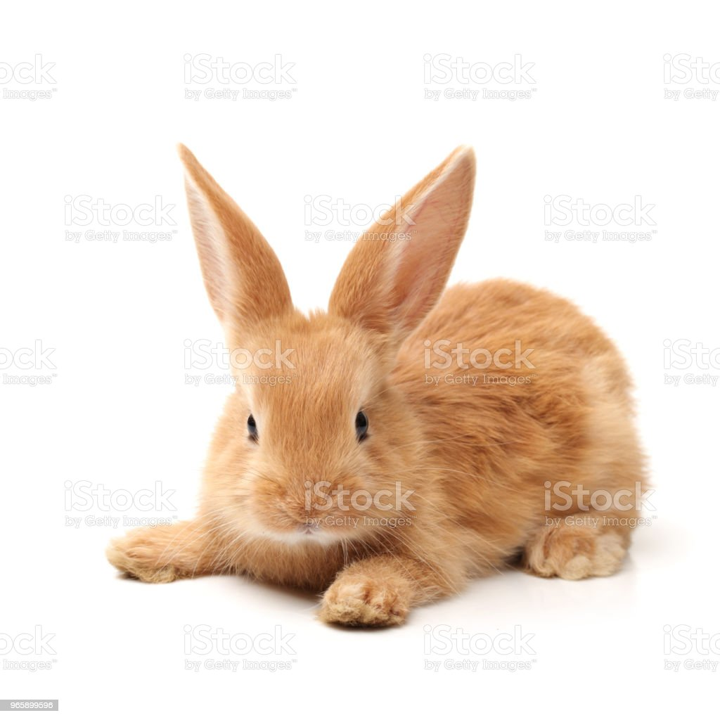 Schattige kleine konijntje op witte achtergrond - Royalty-free Bruin Stockfoto