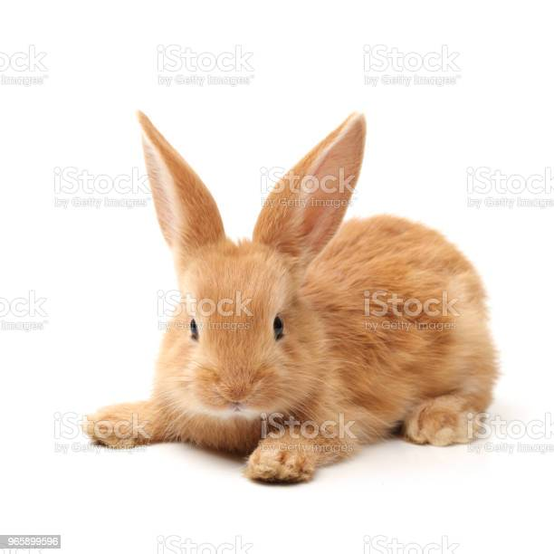 Cute little bunny on white background picture id965899596?b=1&k=6&m=965899596&s=612x612&h=rfrtlgwc3 y9gbgwlyusszfgfod9f3pexuy2hgkyipk=