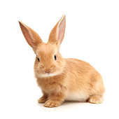 Cute little bunny on white background