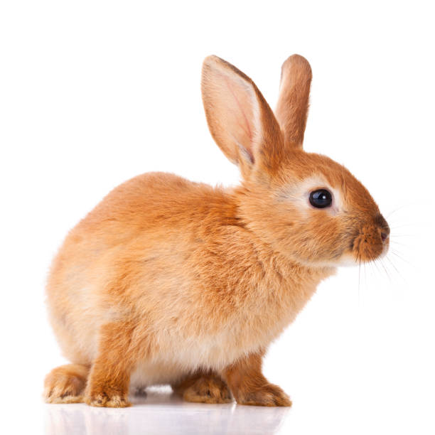 cute little bunny - rabbit stock photos and pictures