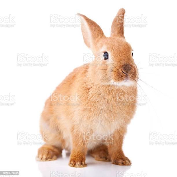 Cute little bunny picture id185327605?b=1&k=6&m=185327605&s=612x612&h=rujzbu ocj vfxrqrvtkfkgbxgtjqvjidgnds6l qry=