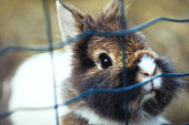 Cute little bunny rabbit looking outside the cage close-up background- Domestic Animals