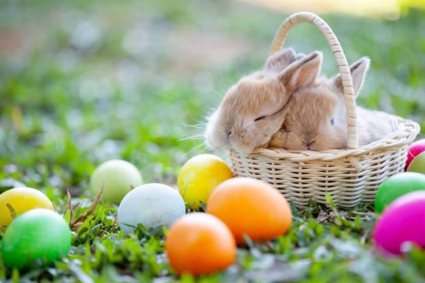 귀여운 작은 토끼 풀밭에서 바구니 및 부활절 달걀에서 자 고 - 부활절 달걀 뉴스 사진 이미지