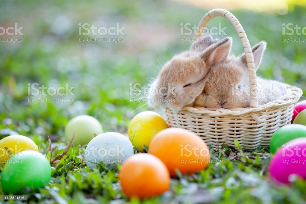 Cute little bunny sleeping in the basket and easter eggs in the meadow stock photo