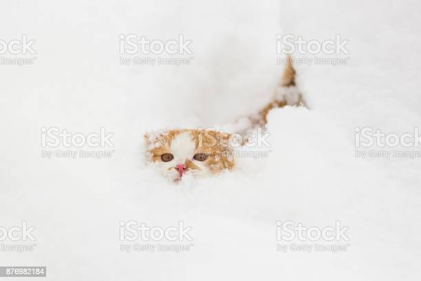Cute little cat in the snow picture id876982184?b=1&k=6&m=876982184&s=612x612&h=rw6yq8xj nsohs0yuqohskalo qvq1yo 2yivr0ovde=