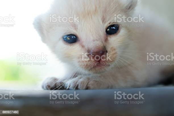 Cute little cat on wooden floorselective and soft focus picture id685927460?b=1&k=6&m=685927460&s=612x612&h=iptucpyf5 yhlbrjwvj3ed9bgdfppnfebkmcsj6gznm=