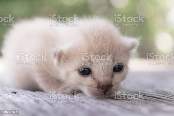 Cute little cat on wooden floorselective and soft focus picture id685927492?b=1&k=6&m=685927492&s=612x612&h=sc3nlg5vbxzf  cugflynegavt07x2dhnjzym2la5hw=