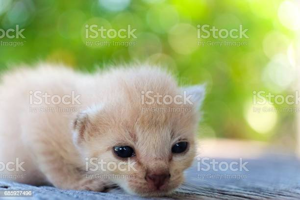 Cute little cat on wooden floorselective and soft focus picture id685927496?b=1&k=6&m=685927496&s=612x612&h=yz4lpnkkposx2pos8iwdw04qhmwt5dpa blwf6n4fp0=