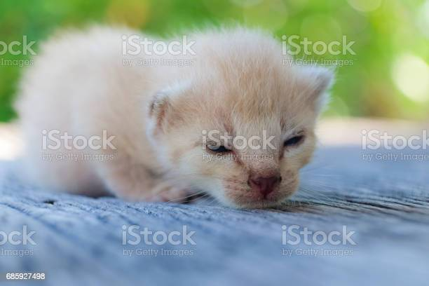 Cute little cat on wooden floorselective and soft focus picture id685927498?b=1&k=6&m=685927498&s=612x612&h=r43fpg7w6gfrlqbzqbegl6oyqhf18ftot9mgwkx3rdg=