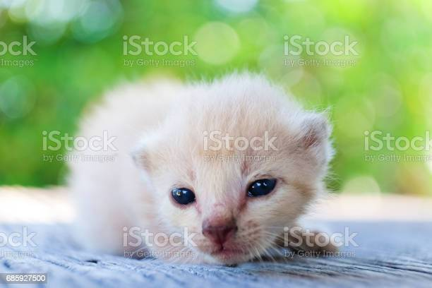 Cute little cat on wooden floorselective and soft focus picture id685927500?b=1&k=6&m=685927500&s=612x612&h=ttxhyt1dv8liwlmlit0hvoturqq 8ncfsawaah4nrci=