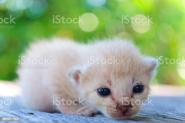 Cute little cat on wooden floorselective and soft focus picture id685927502?b=1&k=6&m=685927502&s=612x612&h=r zr7j estyejiao6fuuk0zm8xv5 2qqk c e2 srl4=