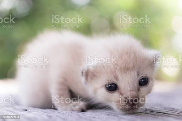 Cute little cat on wooden floorselective and soft focus picture id685927504?b=1&k=6&m=685927504&s=612x612&h=iayqyupejbqtatfvhbixilchegq4o5q9z2vrxizanms=