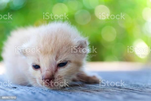 Cute little cat on wooden floorselective and soft focus picture id685927510?b=1&k=6&m=685927510&s=612x612&h=vrlmy szi74whfgq6ch etae0hg1x72awjkhvjeqcam=