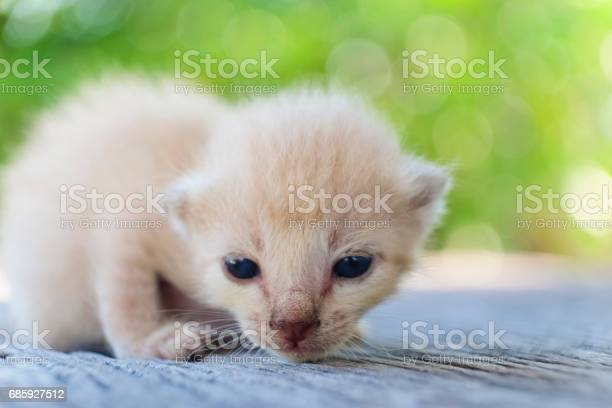 Cute little cat on wooden floorselective and soft focus picture id685927512?b=1&k=6&m=685927512&s=612x612&h=ydoopkwmjhj1o 4wag5dja4q8s79dmmf o2cl9y9z a=