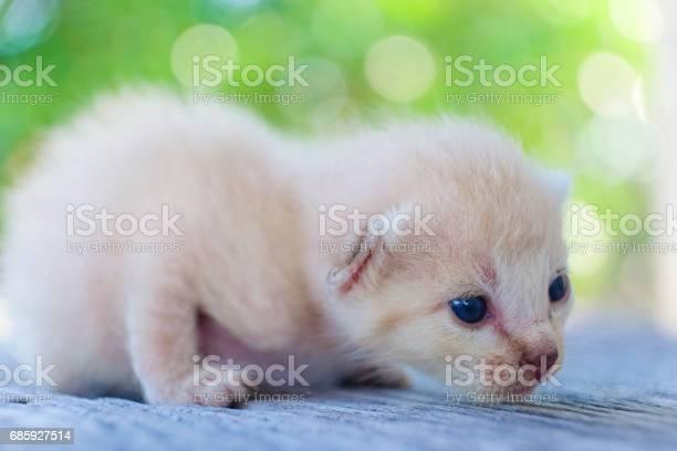 Cute little cat on wooden floorselective and soft focus picture id685927514?b=1&k=6&m=685927514&s=612x612&h=8brhxzctqokh9algqb4q x0ukyj 34zbuoiakg emcc=