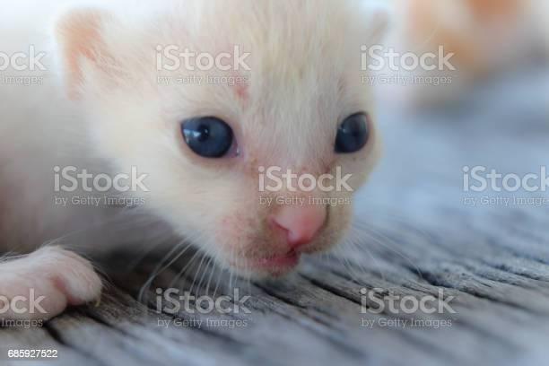 Cute little cat on wooden floorselective and soft focus picture id685927522?b=1&k=6&m=685927522&s=612x612&h=ebkzdjuaek2gdjbzdqsb5y nanjovwkxxcpav4qzxdm=