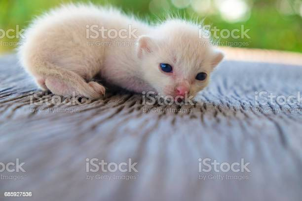 Cute little cat on wooden floorselective and soft focus picture id685927536?b=1&k=6&m=685927536&s=612x612&h=pp5tq05eefpaphee8gi4vrpf3jqf6cbqicmo7xai9d8=