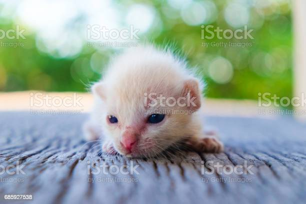 Cute little cat on wooden floorselective and soft focus picture id685927538?b=1&k=6&m=685927538&s=612x612&h=1pa9ur6ocydl8lon495raajqlxmeds5wzjelrfsvebs=
