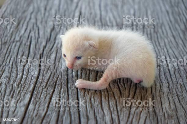 Cute little cat on wooden floorselective and soft focus picture id685927542?b=1&k=6&m=685927542&s=612x612&h=dgdcpw0lpcj ab2geoizjp3gnyvmnxi1q6 gau rcym=