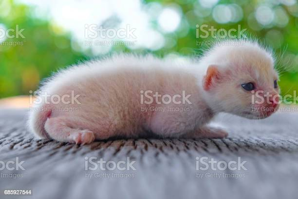 Cute little cat on wooden floorselective and soft focus picture id685927544?b=1&k=6&m=685927544&s=612x612&h=z1tn0nlt9xyuxc15vldud72ygrem46iaw5ho4lqi9aw=
