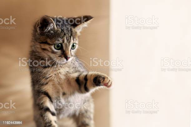 Cute little cat plays with sun light picture id1192443984?b=1&k=6&m=1192443984&s=612x612&h=gepg1x2iv t7kq89nx8tdueayj9maj8yv7ge fz0430=