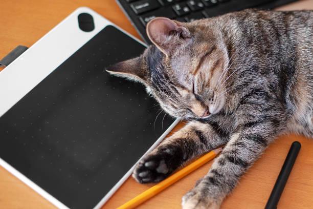 Cute little cat with short hair sweetly sleeps laying on the design picture id1255735995?b=1&k=6&m=1255735995&s=612x612&w=0&h=e xnss2o7sv1tyzvpuo8294jgaxhhjyjy7 zatzp dm=
