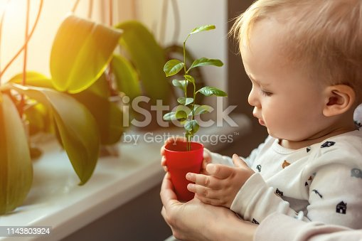 Cute little caucasian toddler boy with mother smiling and having fun holding pot with planted flower near window sill at home. Flower and nature care concept. Children and family happy childhood.