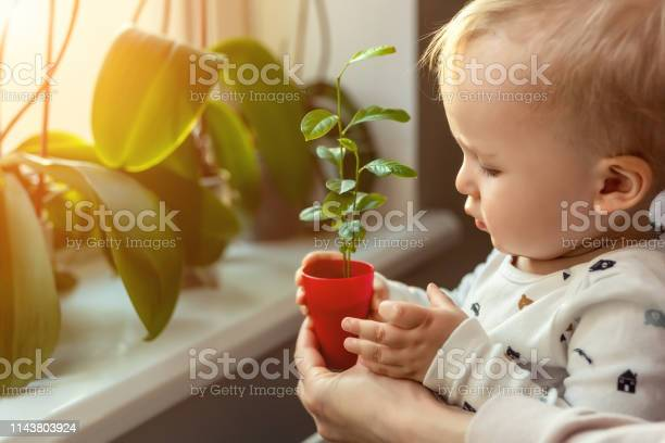 Cute little caucasian toddler boy with mother smiling and having fun picture id1143803924?b=1&k=6&m=1143803924&s=612x612&h=kunvtqbrdibi9mubwexo3xoheyzxsoq  qdntzgkl2a=
