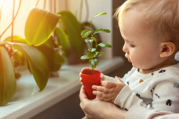 Cute little caucasian toddler boy with mother smiling and having fun holding pot with planted flower near window sill at home. Flower and nature care concept. Children and family happy childhood Cute little caucasian toddler boy with mother smiling and having fun holding pot with planted flower near window sill at home. Flower and nature care concept. Children and family happy childhood. Mother Nature stock pictures, royalty-free photos & images