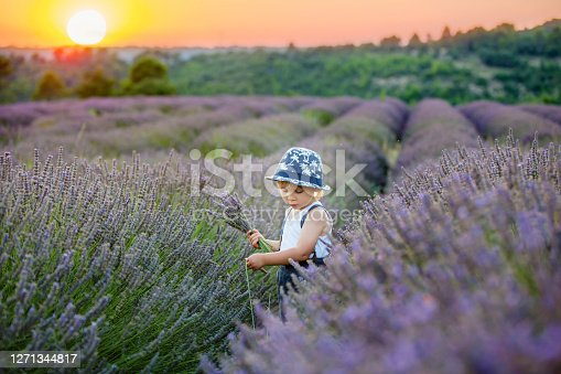 Cute little child, beautiful boy, playing in lavender field on sunset
