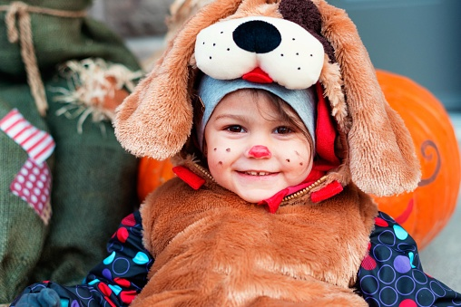 Cute little girl child 2 years old dressed in dog halloween costumes. She is sit behind pumpkin and halloween decoration.. She is make up with pink nose and small black dots on her cheeks. She old black bucket with candy inside. Photo was taken in Quebec Canada.