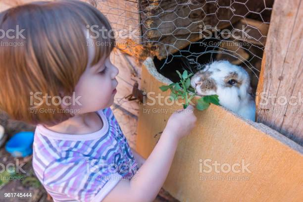 Cute little child girl having fun to feed and play with real rabbit picture id961745444?b=1&k=6&m=961745444&s=612x612&h=1uludytiinchthqpjimnqgsqq7afbmoppvlrvqlolm0=
